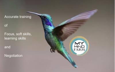 My Mind Farm in-company training